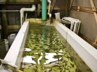 fish-hatchery.jpg